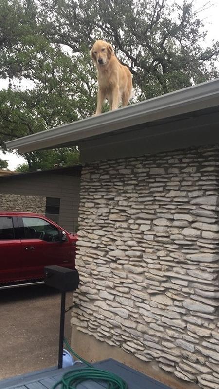 Huck sobe em cima do telhado da casa de seus donos sozinho - Reprodução/Facebook