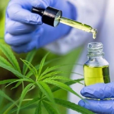 A proposta, de autoria do deputado Fábio Mitidieri (PSD-SE),autoriza o plantio de vegetais como a maconha, denominada Cannabis sativa, para fins científicos ou medicinais, em local e prazo determinado, mediante fiscalização - Getty Images