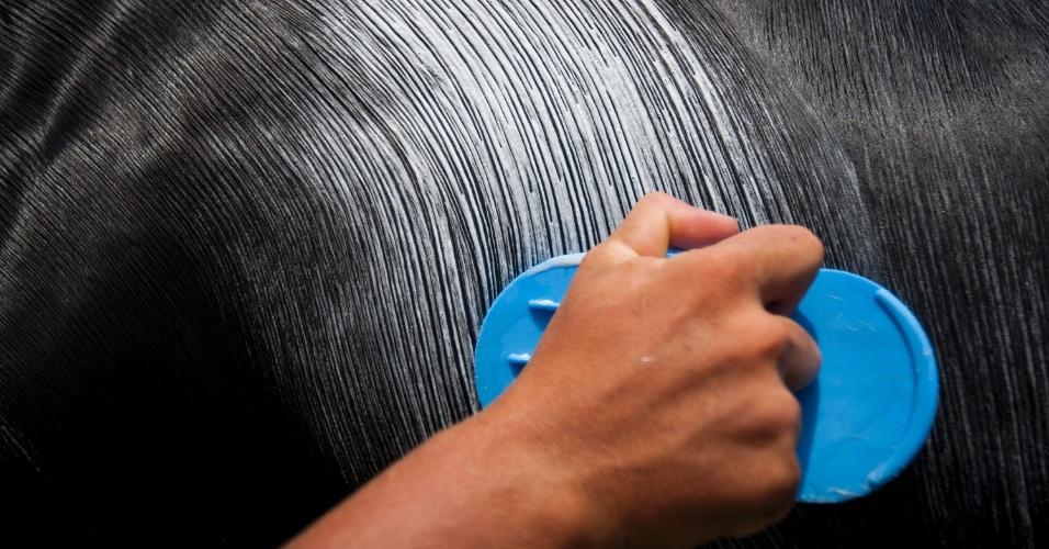 8.jan.2016 - Cavalo é preparado para sair pelas ruas de Bonfim onde acontece o Carnaval a Cavalo
