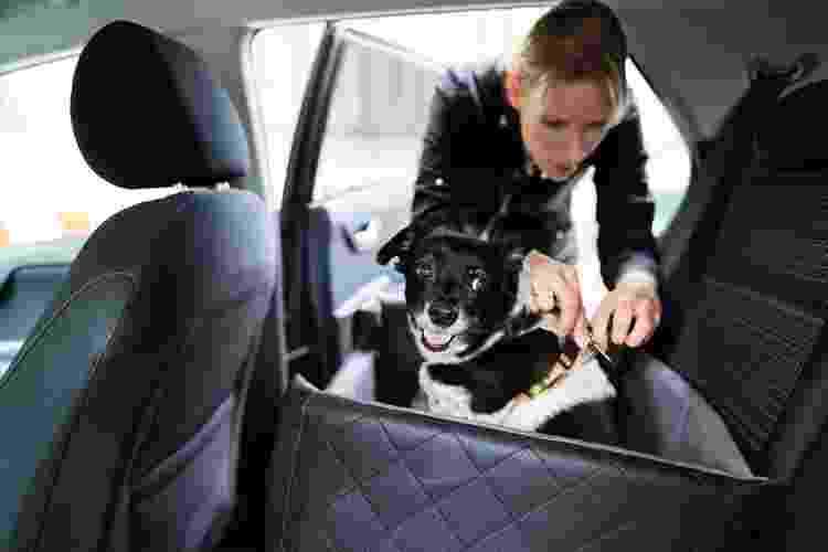 Cão em cadeirinha de transporte - Getty Images/iStockphoto - Getty Images/iStockphoto