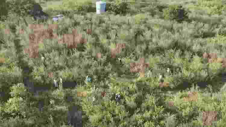 Trecho da área do experimento, na Floresta Nacional do Açu, cinco anos após o replantio. - Gislene Ganade - Gislene Ganade