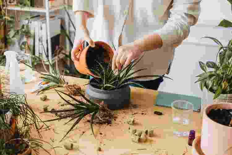 Cada tipo de planta pede um adubo - Getty Images - Getty Images