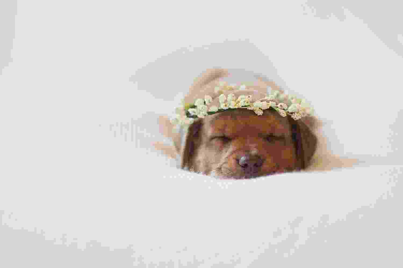 Ensaio de cachorro recém-nascido - Reprodução/Facebook/J.Annabella Images