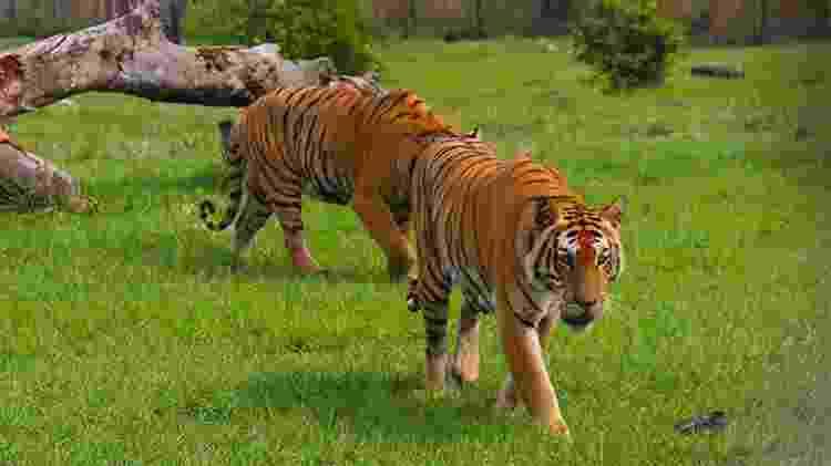 Na Hacienda Nápoles, público pode observar animais como tigres e elefantes - Divulgação/Parque Temático Hacienda Nápoles