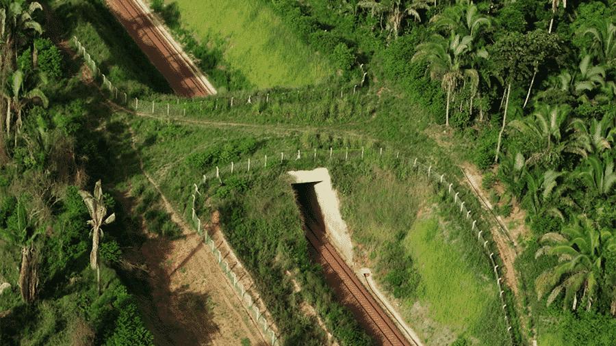 Os primeiros viadutos para passagem de animais silvestres no Brasil foram construídos no ramal ferroviário que liga a mina da Vale em Canaã dos Carajás a Parauapebas, no Pará - Vale/Divulgação