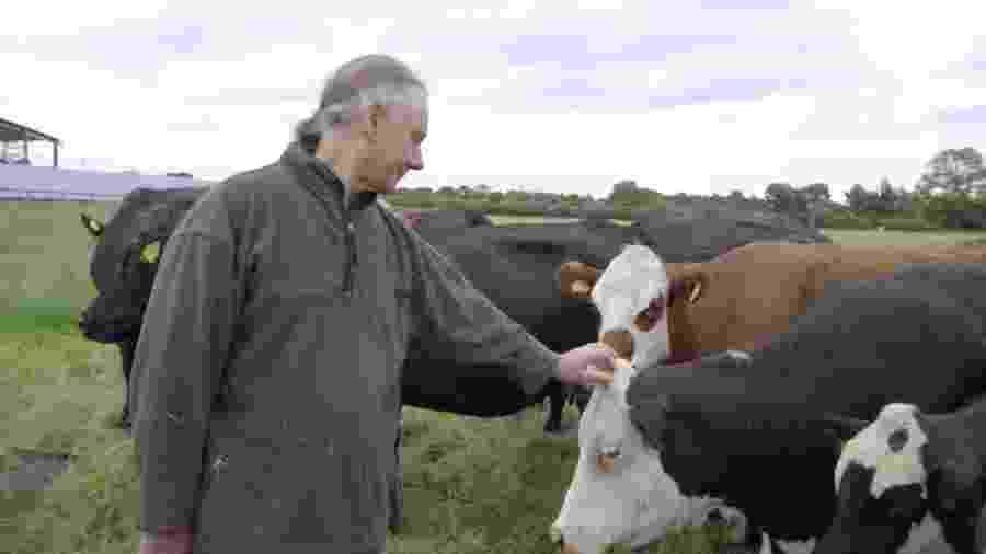 Jay Wilde enviou 63 vacas para um centro de proteção de animais - BBC