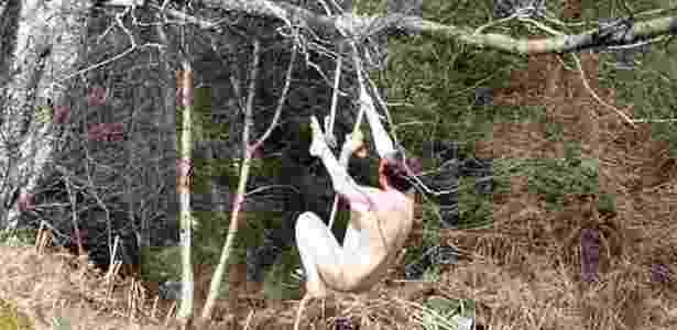 Inicialmente, a artista precisaria apenas de pouco mais de um minuto de imagens pendurada na árvore - BBC - BBC