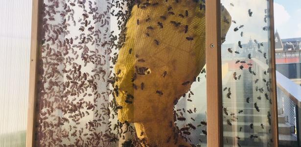 Obra com favos de mel | Artista recria busto da rainha egípcia Nefertiti com 60 mil abelhas