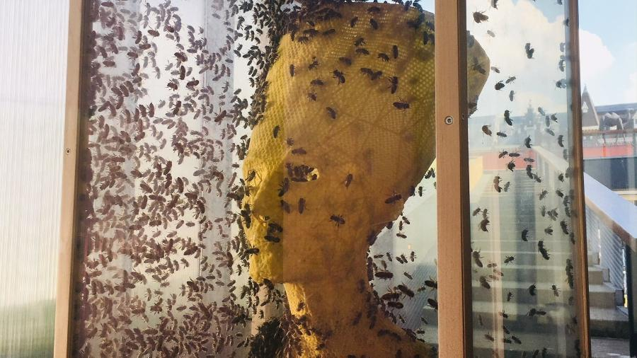 O busto de Nefertiti sendo criado pelas abelhas, com a estrutura do artista Tomás Libertíny, em tempo real - Reprodução/Instagram