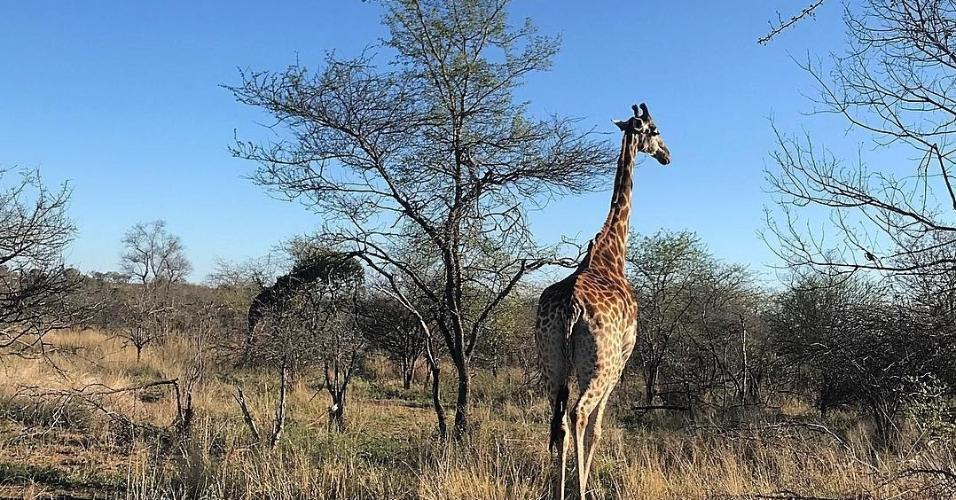 Marina observa girafa no Parque Nacional Kruger