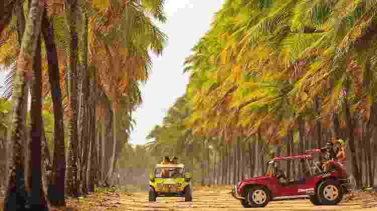 Passeio de bugue no Coqueiral de Maracaípe, próximo a Porto de Galinhas   - Vinícius Lubambo/Divulgação - Vinícius Lubambo/Divulgação