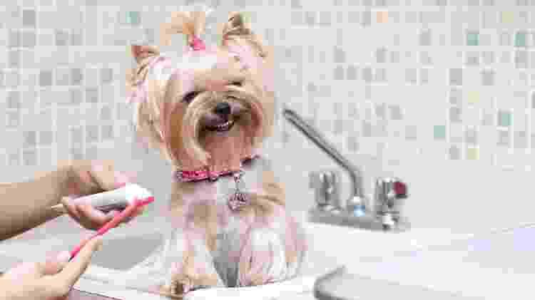 O ideal é criar uma rotina de escovação desde quando eles são filhotes - Getty Images/iStockphoto - Getty Images/iStockphoto