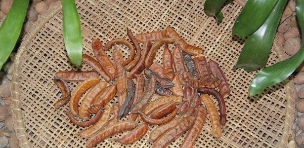 Emulsão é feita a partir da vagem do jucá, velha conhecida dos ribeirinhos amazônicos