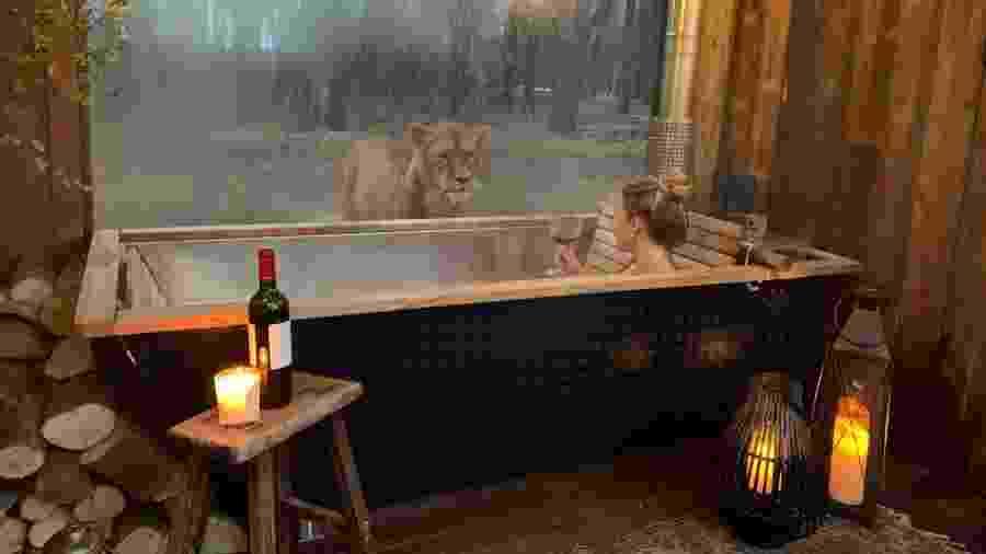 Na hospedagem Lion Lodge, é possível admirar os leões da reserva Port Lympne Hotel and Reserve  - Divulgação