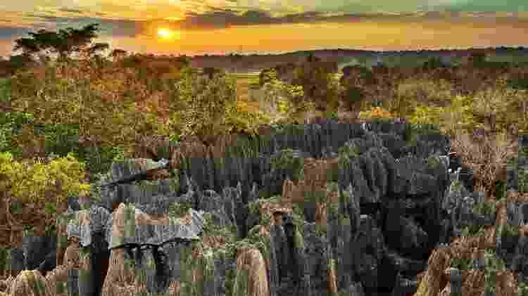 Fauna e flora características de Madagascar se encontram no Parque Nacional Tsingy de Bemaraha - Getty Images