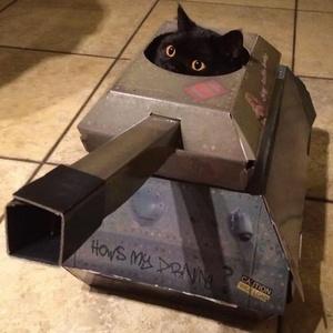 Resultado de imagem para gato no tanque de guerra