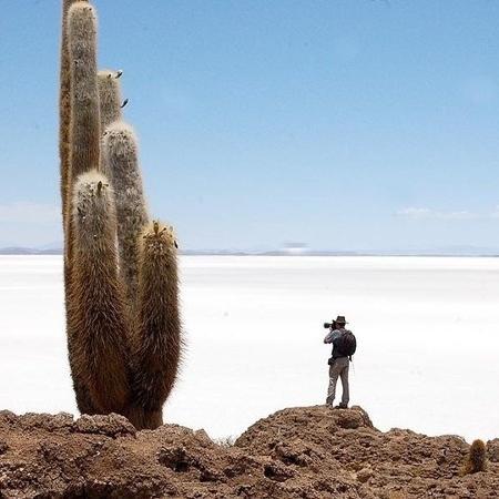 Os cactos gigantes são algumas das atrações do Salar de Uyuni - Renê Castro