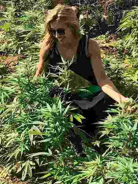 Cris Dias em plantação de maconha na Jamaica - Reprodução / Instagram