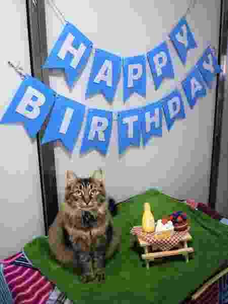 A gatinha Monique em sua solitária festa de aniversário - Reprodução/Twitter