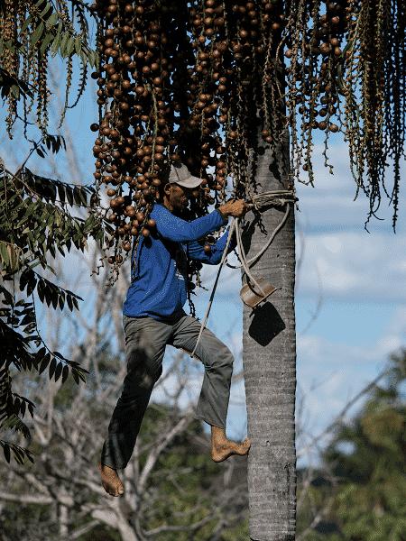 Cerrado é bioma que agrupa boa parte do território nacional, com dezenas de etinas e comunidades. Mas o que você sabe sobre ele? - Marcus Desimoni/WWF Brasil/Divulgação