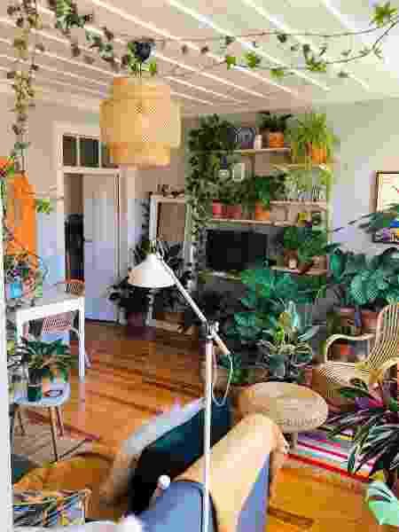 casinha da porta azul - mais plantas - Arquivo pessoal - Arquivo pessoal