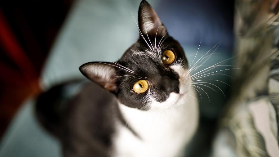 Autoridades acham que gato pode ter entrado no avião durante a limpeza ou alguma checagem de engenharia - Getty Images/iStockphoto