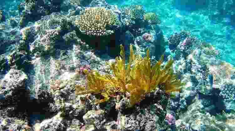 Os corais 'sequestram' algas inteiras para fazer simbiose bichos - Getty Images - Getty Images