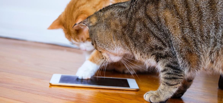 Brincadeiras tecnológicas podem estimular os gatinhos, mas não são todos os tutores que aprovam - Getty Images/iStockphoto