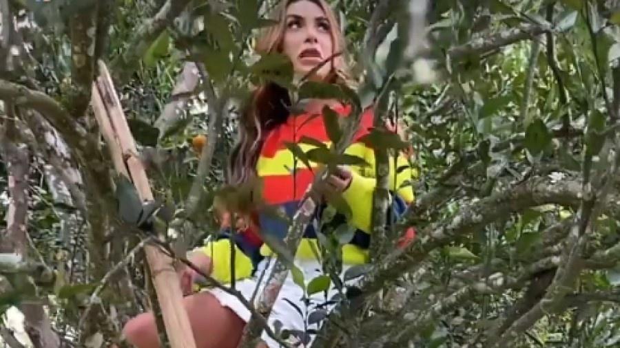 Nicole Bahls subiu em pé de mexerica para pegar frutas  - Reprodução/Instagram