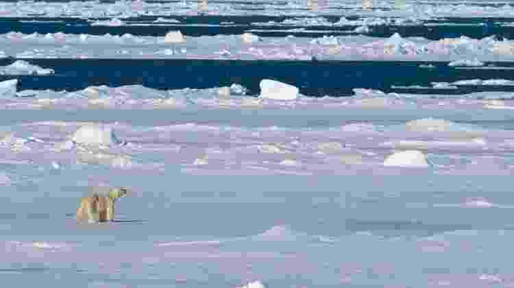 Paisagem com urso polar no Polo Norte - iStock - iStock