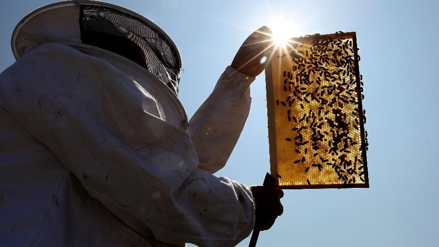 Testes mostram que a qualidade do mel aumentou e que as abelhas encontraram 150 flores diferentes na região - Dan Kitwood/Getty Images