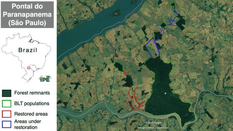 O Parque Estadual do Morro do Diabo (mancha verde grande) é o principal habitat do mico-leão-preto. As áreas com vegetação recuperada (linhas vermelhas, que formam o maior corredor florestal plantado do Brasil) e em recuperação (linhas azuis, o Corredor Norte) unem a reserva a outros fragmentos de Mata Atlântica - Mapa: Instituto de Pesquisas Ecológicas (Ipê) - Mapa: Instituto de Pesquisas Ecológicas (Ipê)