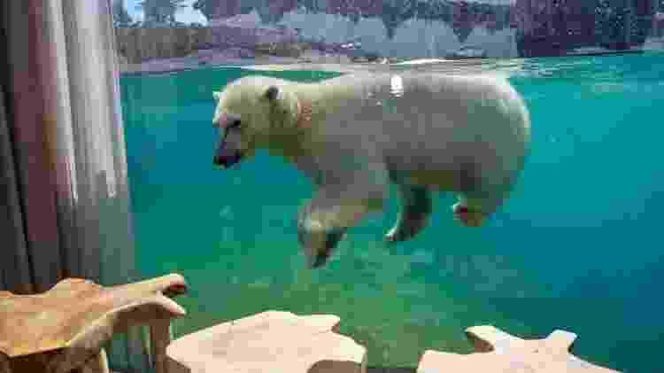 Pairi Daiza - ursos polares - Pairi Daiza - Pairi Daiza
