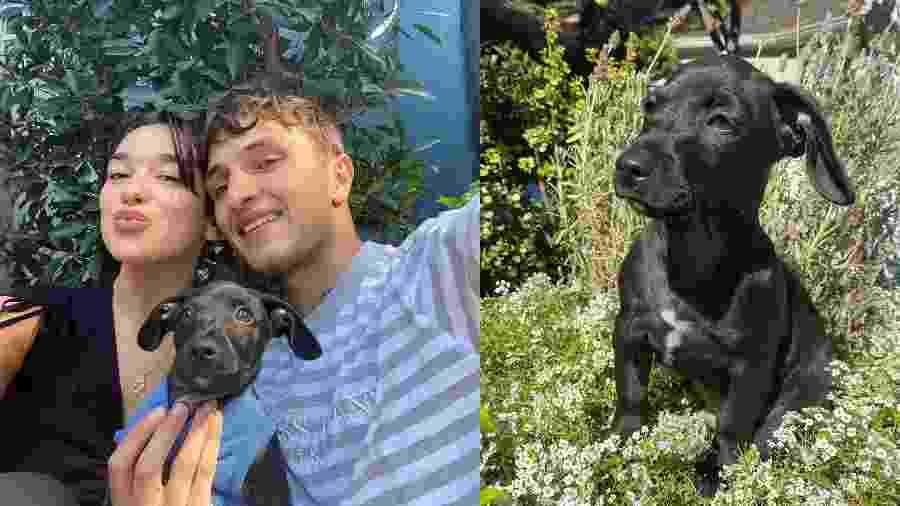 Dua Lipa ao lado do namorado Anwar Hadid e o cachorro Dexter - Reprodução/Instagram