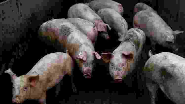 H1N1, BBC 3 - DAMIEN MEYER/GETTY IMAGES - DAMIEN MEYER/GETTY IMAGES