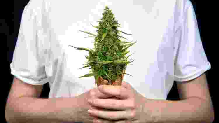 Sorvete cannabis - PsychoBeard/Getty Images/iStockphoto - PsychoBeard/Getty Images/iStockphoto