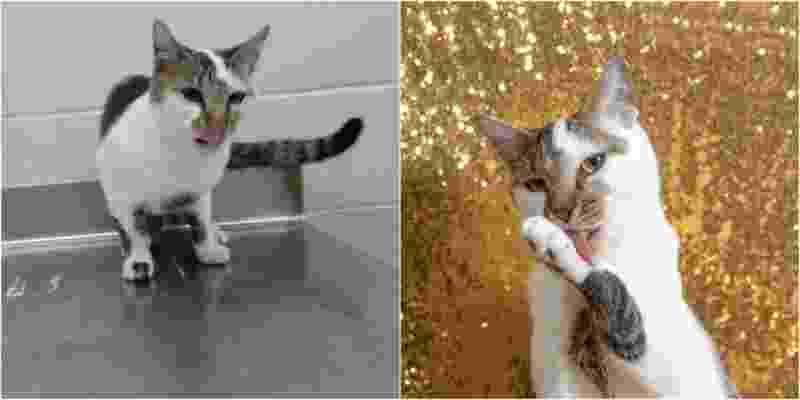 Fotos profissionais ajudam animais em adoção - Reprodução/PetaPixel