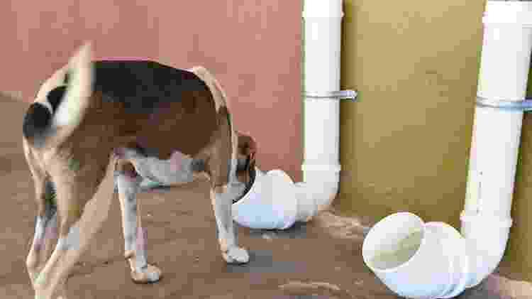 Cachorro canos de pvc - Reprodução - Reprodução