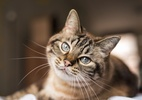 Nova York aprova lei que proíbe retirar garras de gatos (Foto: iStock)