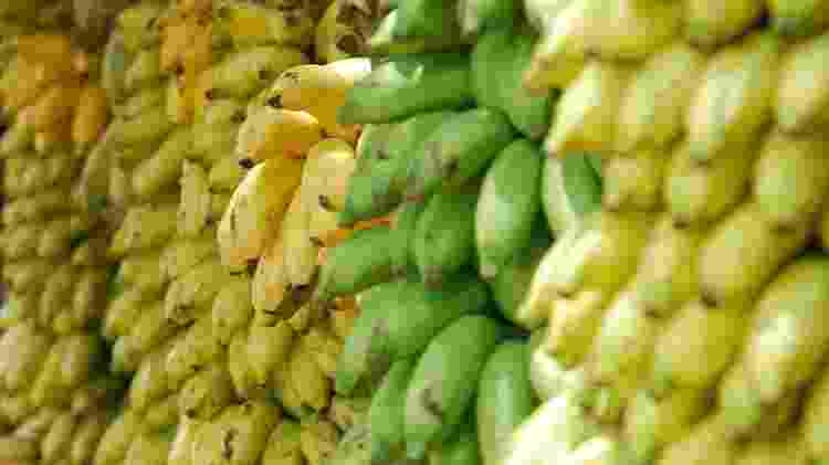Bananas diferentes tipos - Lotte Löhr / Unsplash - Lotte Löhr / Unsplash