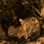 Pantanal - Valdemir Cunha