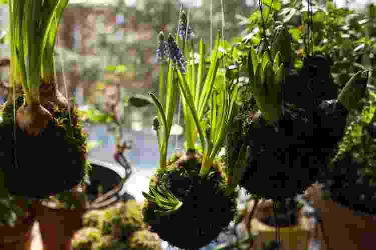 Kokedama pode abrigar várias plantas e decorar todos os cômodos da casa - Getty Images/iStockphoto - Getty Images/iStockphoto