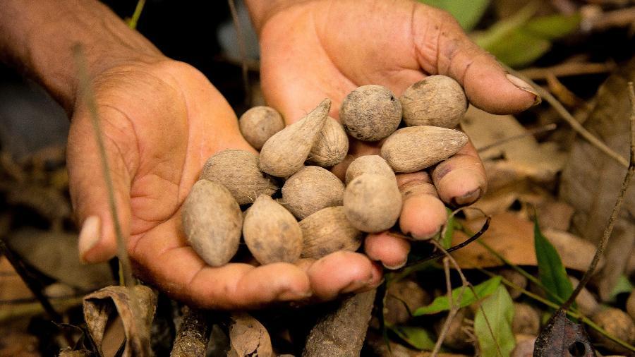 Extração de sementes de murumuru - Divulgação/Natura