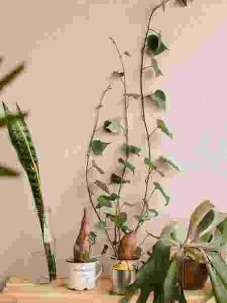Cantinho de Beatriz Nunes com plantas cultivadas em água - Arquivo pessoal - Arquivo pessoal
