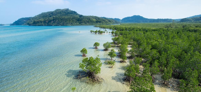 Ilha de Iriomote: rio de águas claras - Ippei Naoi/Getty Images