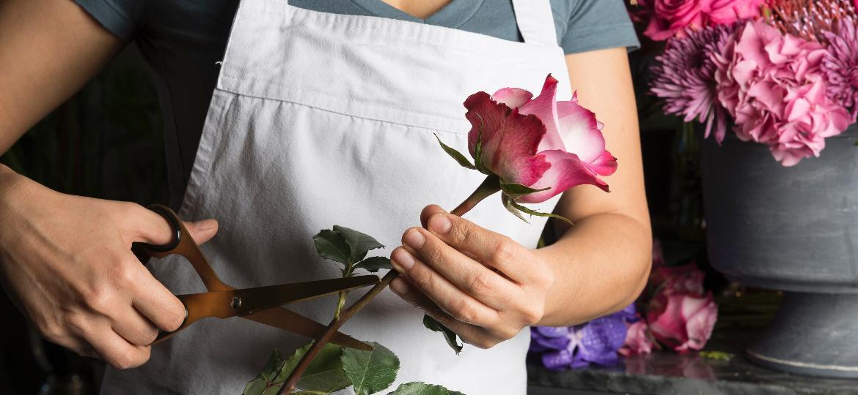 Cortar o cabinho na diagonal faz a rosa durar mais? Bom, isso é meia verdade - Getty Images