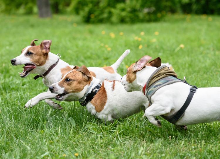 Creches para cães podem ser uma boa opção para ajudar o bichinho - Getty Images/iStockphoto - Getty Images/iStockphoto