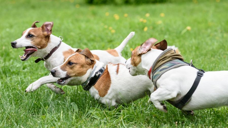 Imagem ilustrativa; Cães Rambo e Spike teriam sido vítimas de maus-tratos e conquistaram direito de entrar na Justiça - Getty Images/iStockphoto