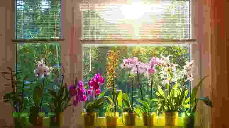 Orquídeas na janela - Getty Images/iStockphotos - Getty Images/iStockphotos