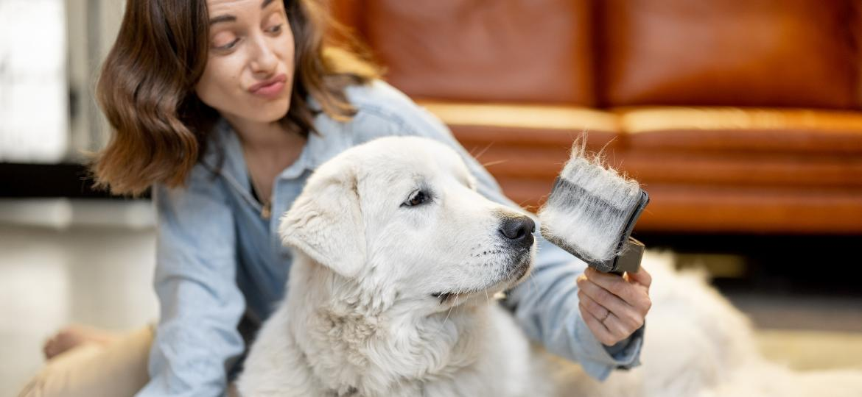 Sofre com os pelos espalhados pela casa? Saiba por que os animais soltam fios - Getty Images/EyeEm
